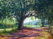 Bayou Oak